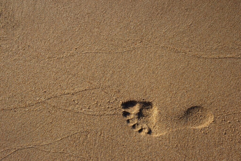 In the footsteps of our digital legacy